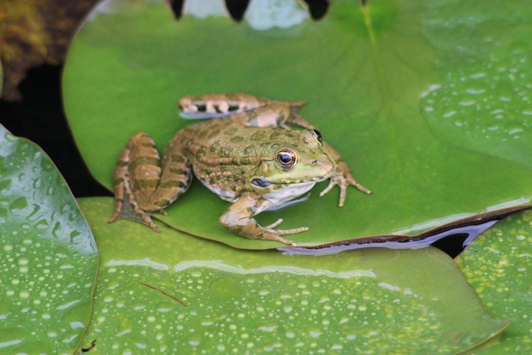 Под охраной находятся реликтовые болота, которые не менялись последние 10 миллионов лет