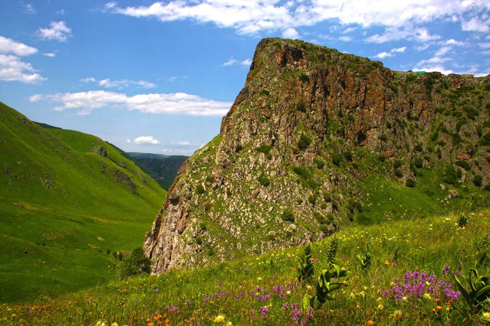 Летом в горах преобладает зеленый цвет