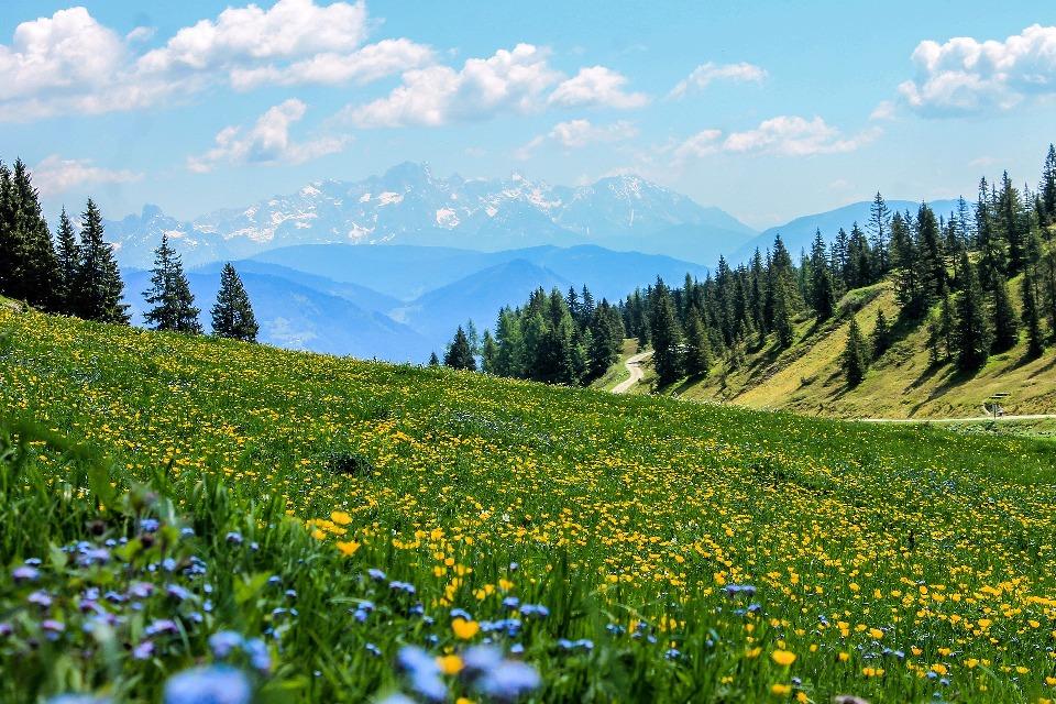 Очень живописна зона альпийских лугов