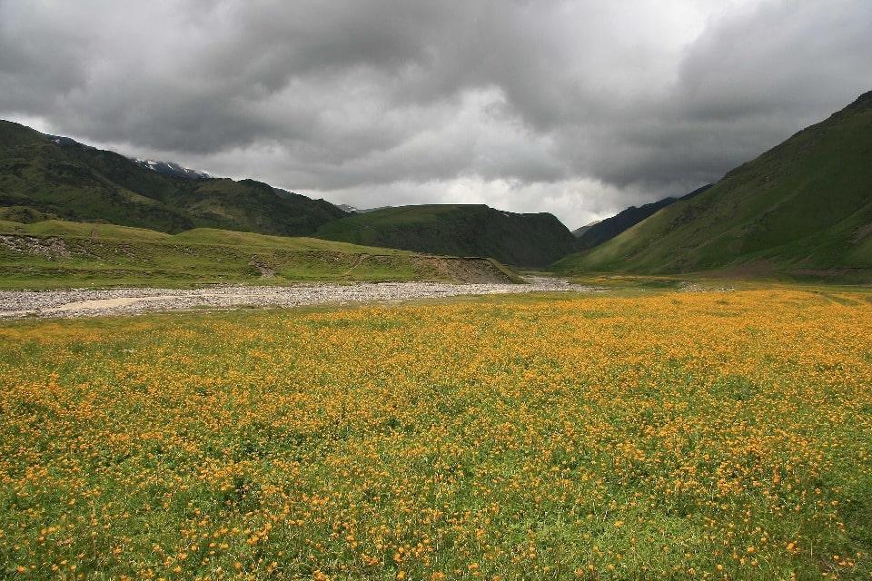 Летом горы украшает множество цветов