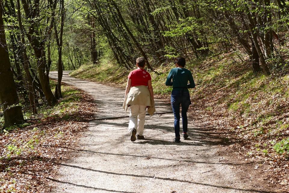 Тропа Боткина способствовала появлению терренкура – лечебных прогулок по горным тропам