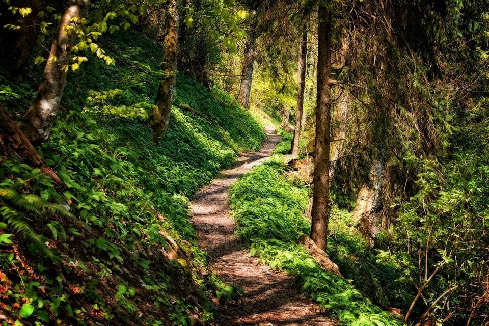 Маршрут идет через лесные заросли