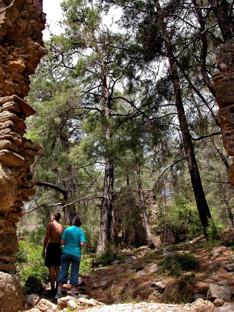Древние руины скрываются среди кедров и сосен
