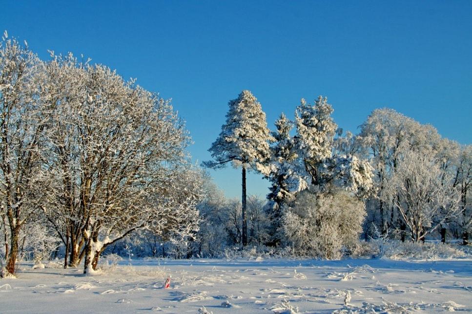 Вепсский лес красив в любое время года