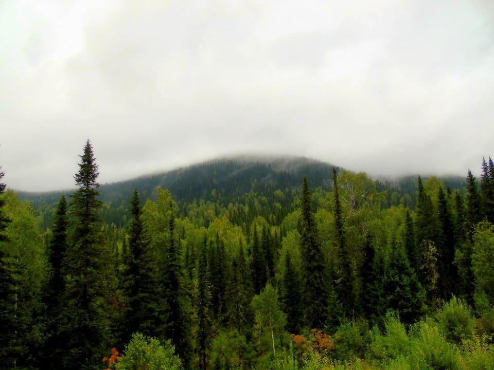 Летом частыми гостями являются туман и дожди