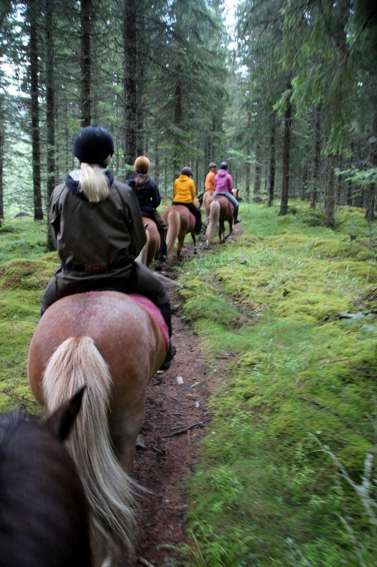 В парке туристам предлагают походы на лошадях