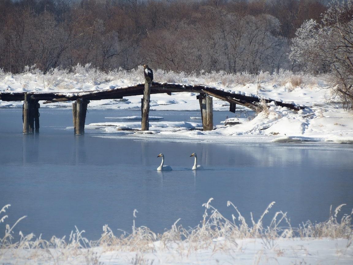 Через многочисленные речушки и ручейки перекинуты мостики