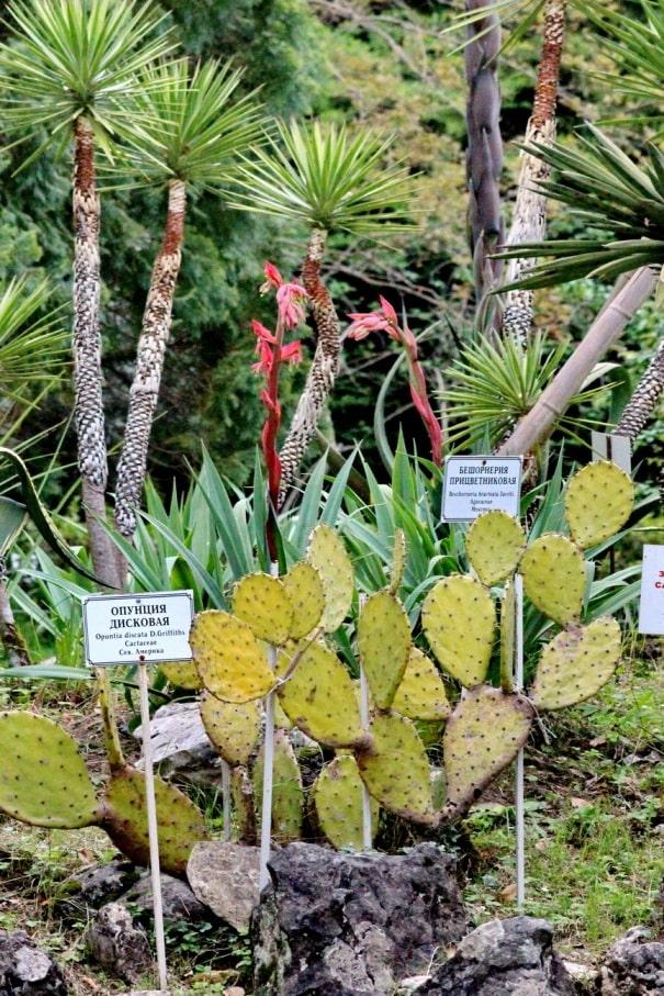 Парк южных растений