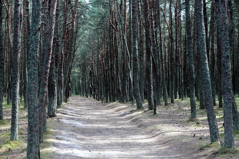 Тропа идет сквозь вековой лес