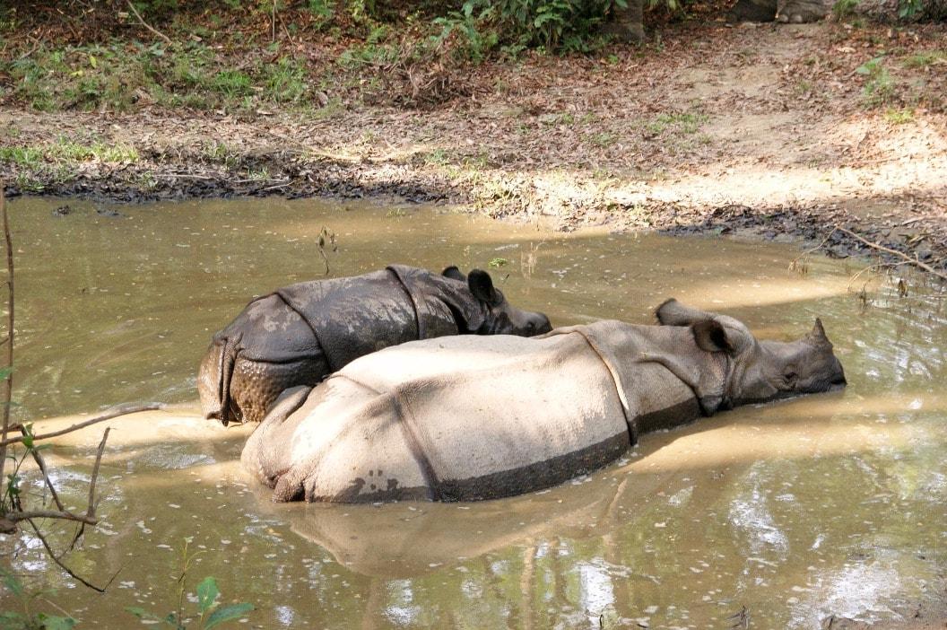 Королевский парк Читван