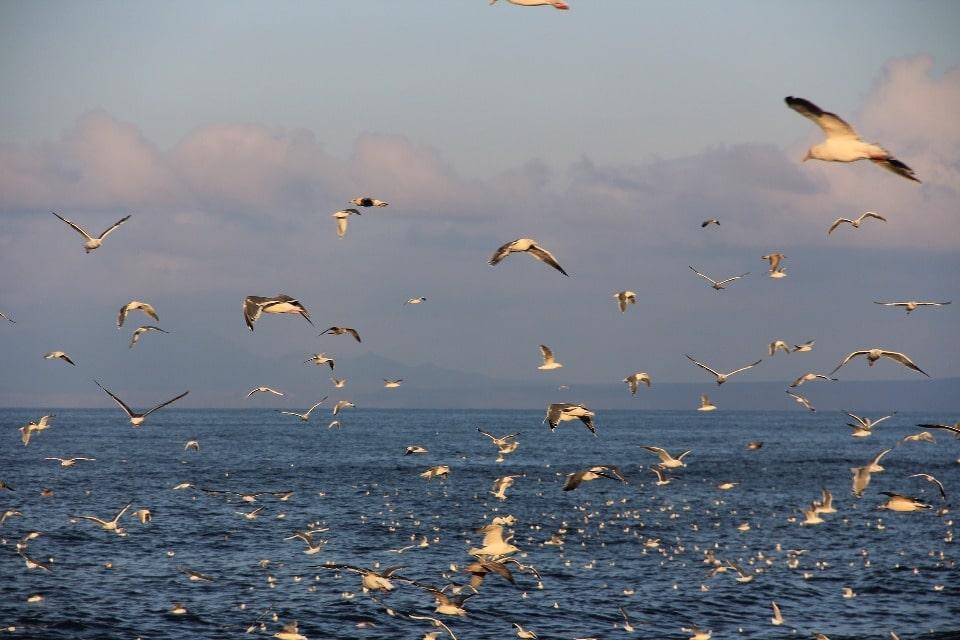 На острове насчитывается 72 вида птиц