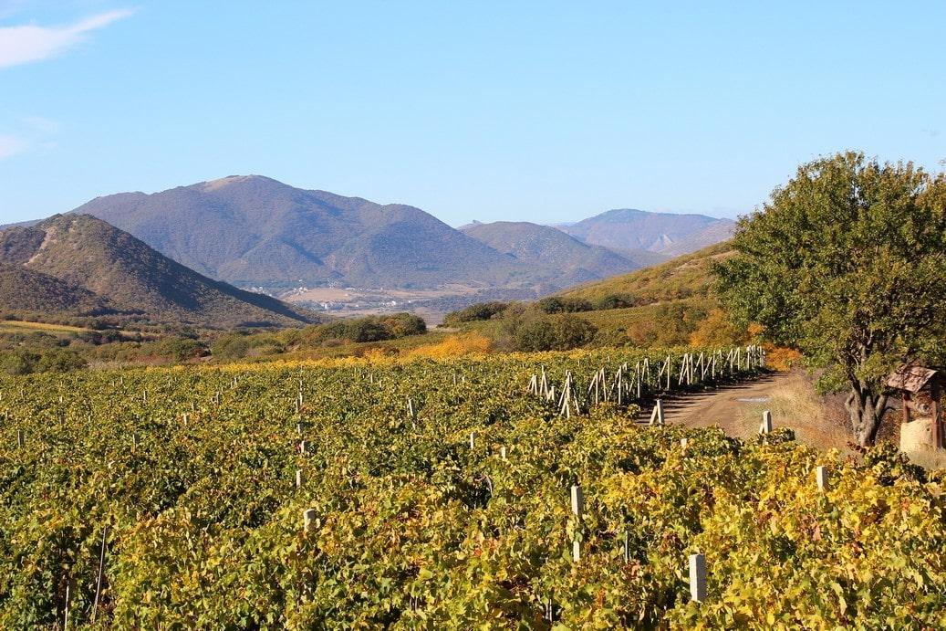 Еще князь Голицын разбил здесь более 100 гектар виноградников