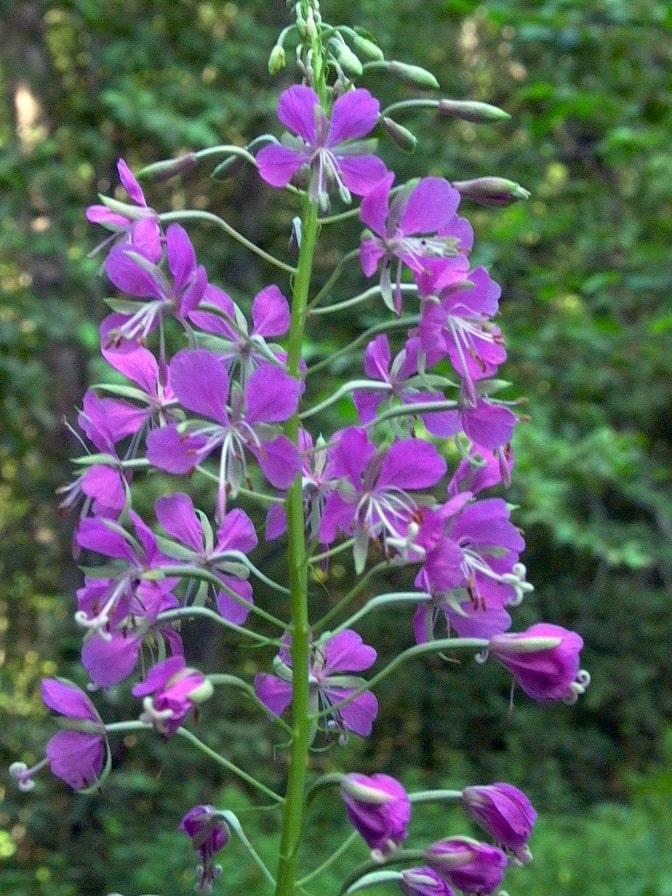 В заповеднике насчитывается около 700 видов растений