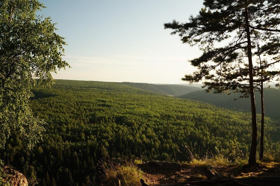 Девственные леса