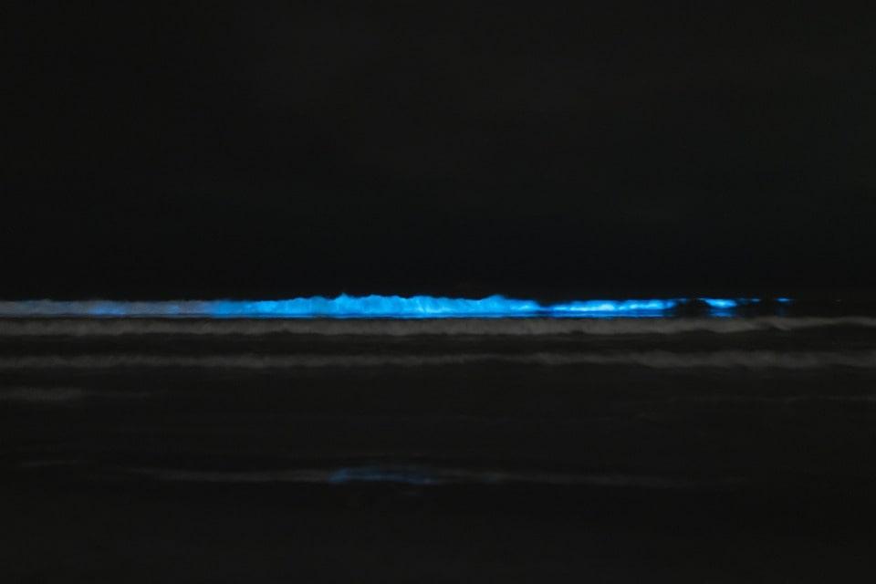 Биолюминесценция моря