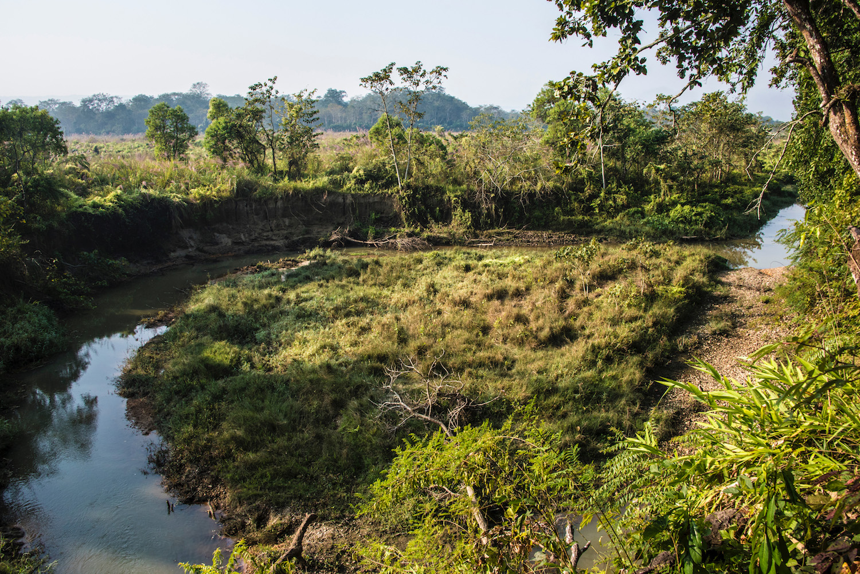 Читванские джунгли