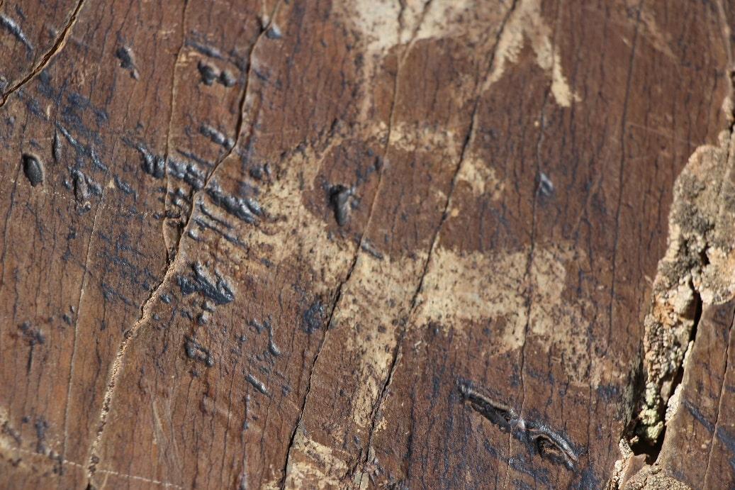 На территории заповедника можно встретить петроглифы