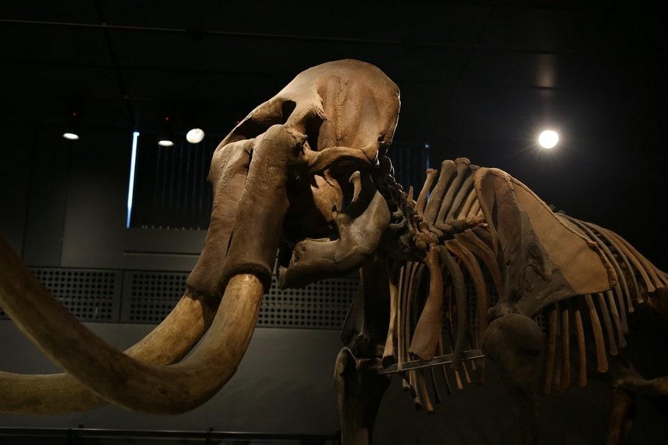 Тысячи лет назад в карстовую воронку провалился мамонт