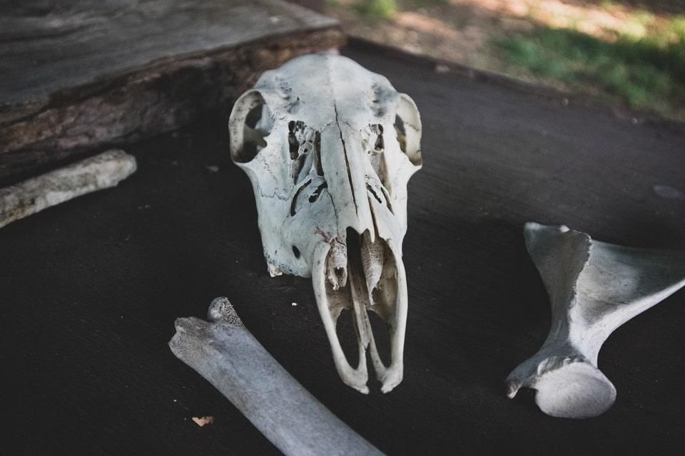 Ученые обнаружили в пещере кости древних животных
