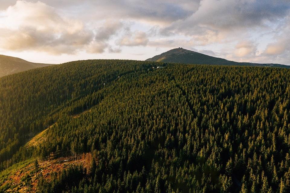 Территория лесов
