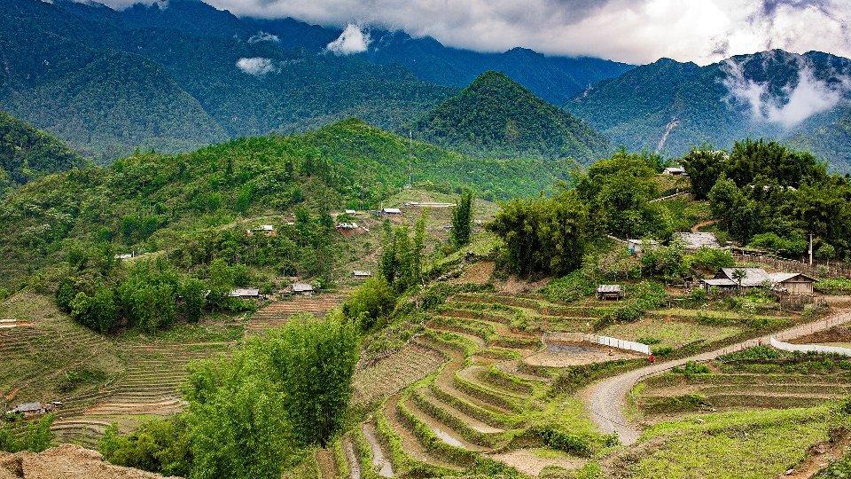 На таких террасах выращивают рис и кукурузу