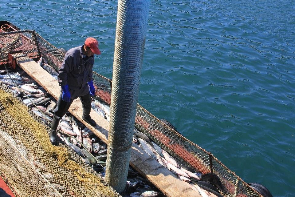 Местные жители во все времена занимались рыбным промыслом