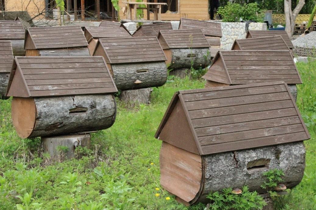 В таких «коттеджах» живут горные пчелы