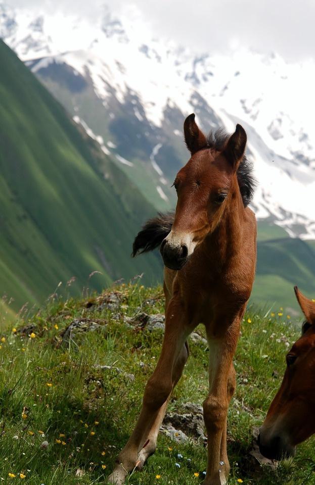 Лошади – неотъемлемая часть горного пейзажа
