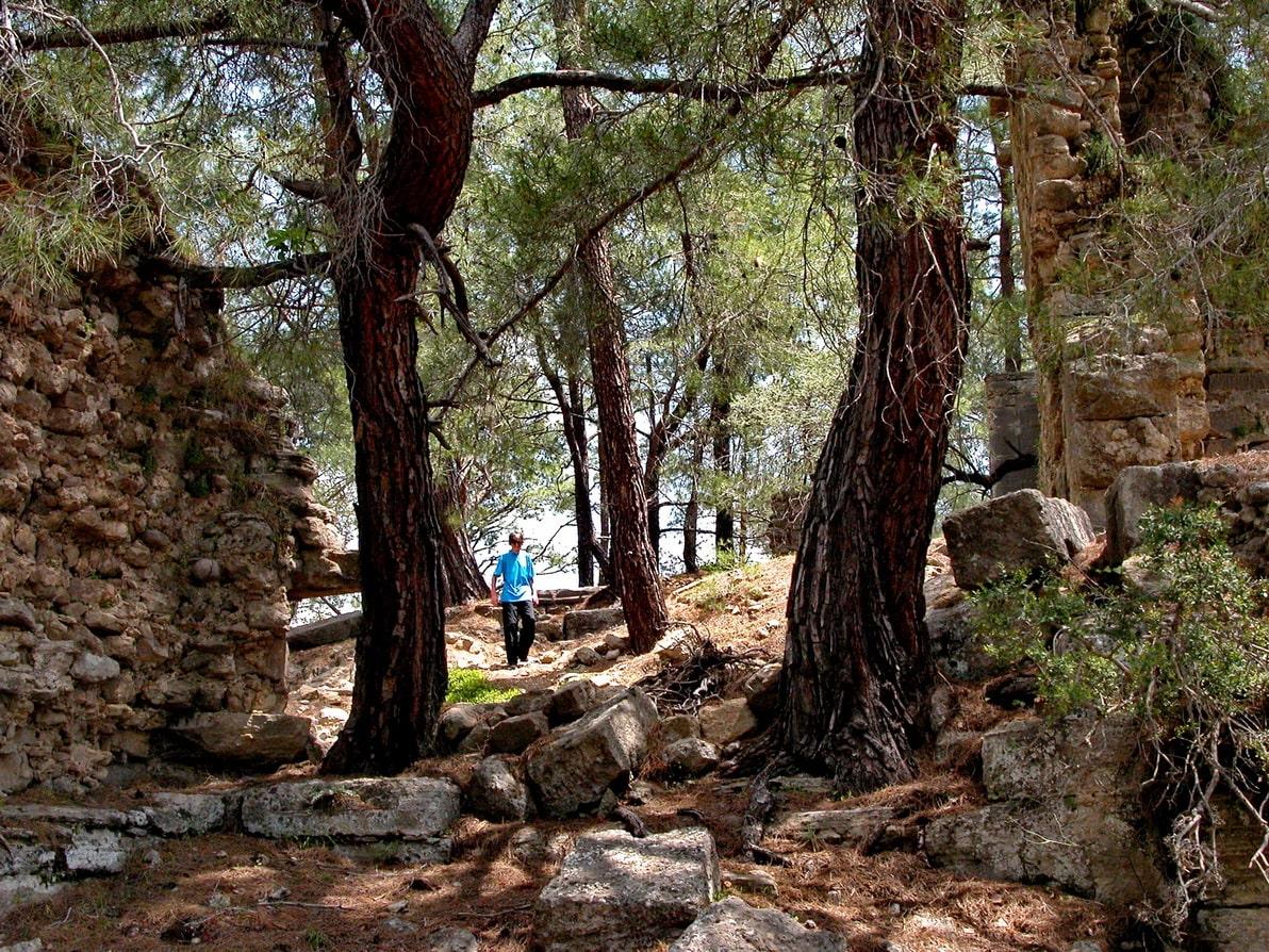 Лесной воздух насыщен запахом сосновой хвои