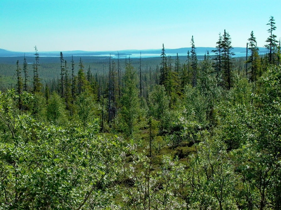 Типичный ландшафт Мурманской области