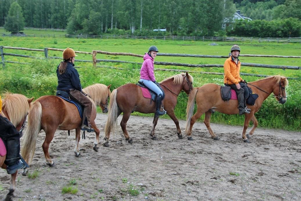 В деревне Дубёнки действует конный клуб