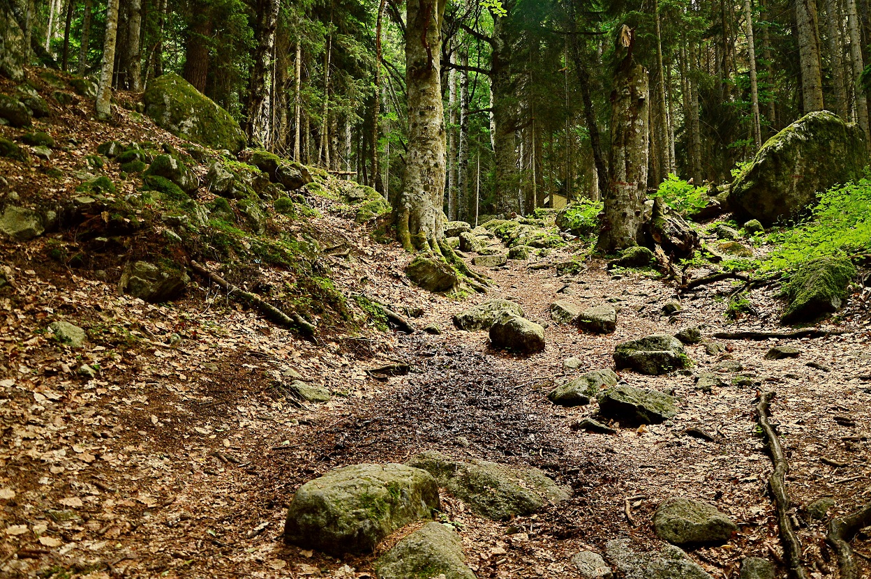Экотропа идет по дремучему лесу