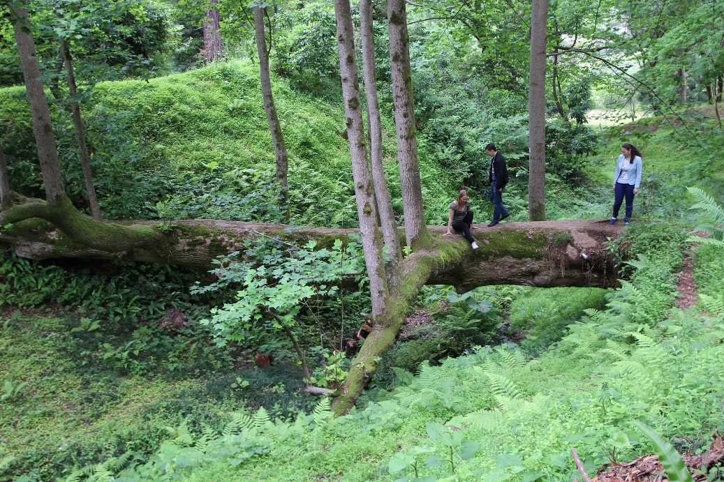 Местами лес напоминает тайгу