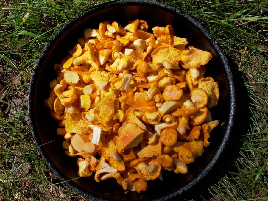В прибрежных лесах в изобилии «водятся» грибы и ягоды