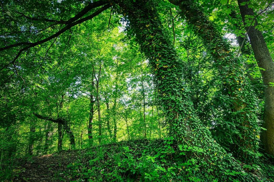 Субтропический климат пришелся по душе вьющимся растениям