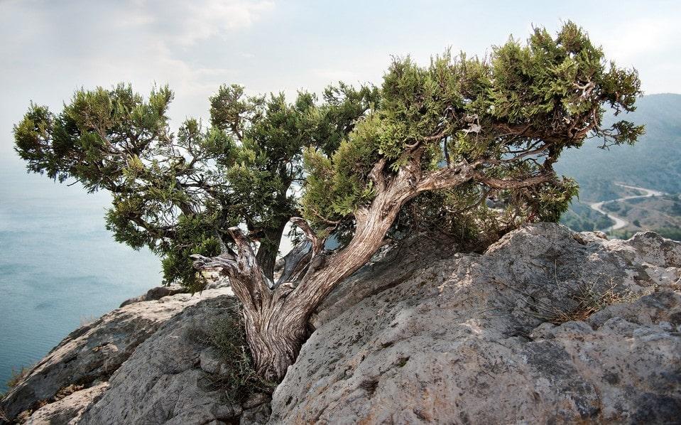 На тропе встречаются очень живописные скалы