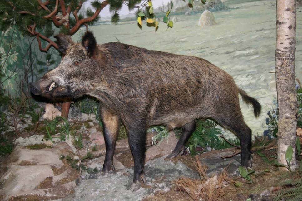 В Теберде действует музей природы