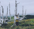 Путешествие на край света - острова Сахалин и Шикотан