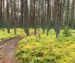 Мультитур - Селигерская сказка - Тверская область