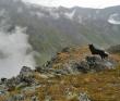 К заповедным озёрам и долинам Архыза [Кавказ]