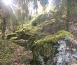 Прогулка вокруг парка Монрепо на каяках (байдарках)