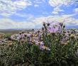 Алтай: на байдарках по Чуйской степи