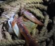 На катере по островам залива Петра Великого (Японское море) с рыбалкой и ловлей кальмара