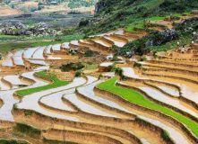 д.Та Финн. Рисовые террасы