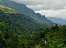 Шри-Ланка (о. Цейлон), Спящий слон. Путешествие на остров Цейлон