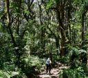 Кения, Восхождение на гору Кения и сафари в Масаи-Мара