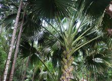Маврикий, Другая часть Эдема