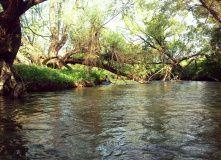 Подмосковье, Сплав по реке Серёна на байдарках - Калужская область