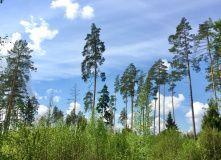 Подмосковье, Пеший поход Истра-Звенигород