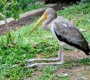 г.Куала-Лумпур. Парк птиц